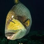 01. BORIS PEJCIC - Compact FISH