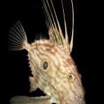 05. FABRIZIO MARCUZZO - Compact FISH