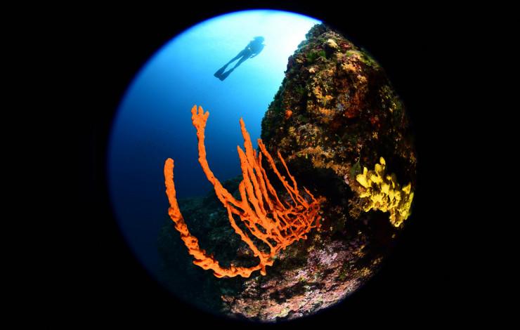 4. Mares Underwater Photo Marathon Cup Rab - pobjedničke fotografije