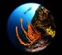4. Mares Underwater Photo Marathon Cup Rab – pobjedničke fotografije
